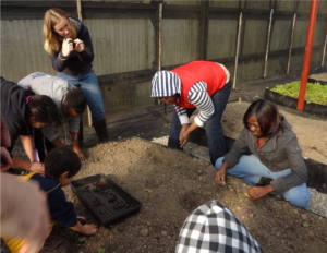Students learning about soil and plants at an organic farm.