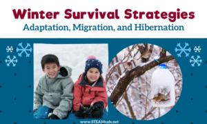 Winter Survival Strategies